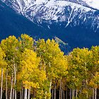 Autumn Aspens and Mountains by Photopa