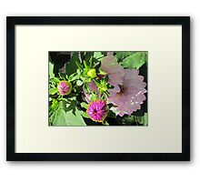 When the dahlias promise to show up ... Framed Print