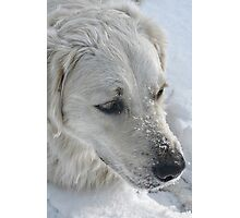 Just a Pair of Pretty Eyes and a Snow-covered Muzzle Photographic Print