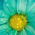 Wet Blue Daisy by April Webb