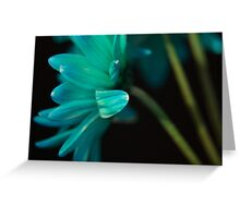 Blue Daisies from Behind Greeting Card