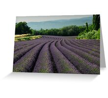 Fields of Lavender  Greeting Card