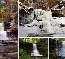 Sheldon Reynolds Falls In Every Season by Gene Walls