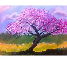 Blossom Tree by Terri Holland Photographic Print