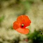 Petit Coquelicot  by Camille Freytag