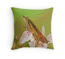 Mint Moth Up Close Throw Pillow