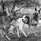 The Latest Gossip At The Dog Park.  by Alex Preiss