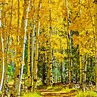 Fall Aspens by Photopa