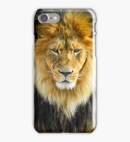Lion with Intimidating Stare iPhone Case/Skin