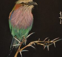Lilac Breasted Roller by Beverley Jacobs