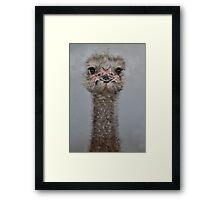 Ostrich 3 Framed Print