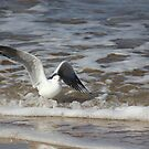 Surfing Seagull by Kymbo