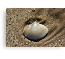 Nestled in the Sand Canvas Print