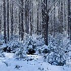 Forest in the Snow by Karine Radcliffe