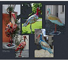 Storks Photographic Print