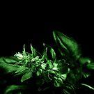 Basil Bud by David Mellor