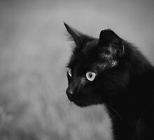 Black Cat by Kimberose