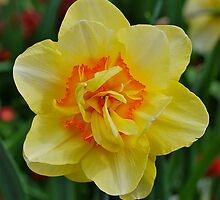 Delightful Daffy Dilly by Penny Smith
