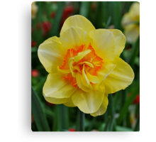 Delightful Daffy Dilly Canvas Print