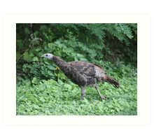Milwaukee Wild Turkey Art Print