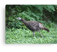 Milwaukee Wild Turkey Canvas Print