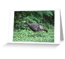 Milwaukee Wild Turkey Greeting Card