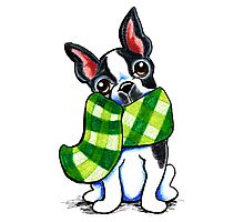 Boston Terrier Happy Plaid Scarf Photographic Print