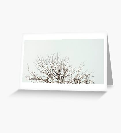 Tree Crown Without Leaves Greeting Card