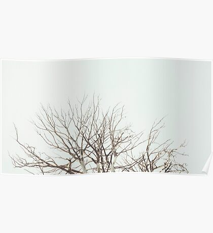 Tree Crown Without Leaves Poster