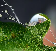 Dew Drop Fun   [please view larger ] by relayer51