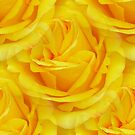 Modern Abstract Seamless Yellow Rose Petals by taiche