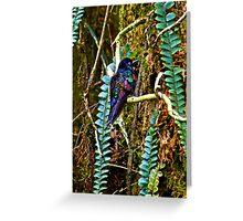 Colorful Mindo Hummer Greeting Card
