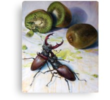 """ Kiwis and Stag Beetles ( Struggle for Constancy)"" Canvas Print"