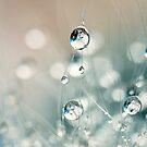 Soft Cactus Sparkles by Sharon Johnstone