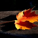 The Color of Fall by Grinch/R. Pross