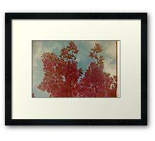 Cherry Blossom. Framed Print