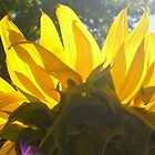 Sunflower at 11 a.m. by CORA D. MITCHELL