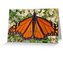 Wings Wide Open Greeting Card