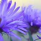 New England Fall Asters - OnThe Wild Side  by T.J. Martin