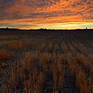 Wheat Stubble Sunset by DawsonImages