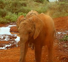 Baby Elephant Kicking Up Dust by Carole-Anne