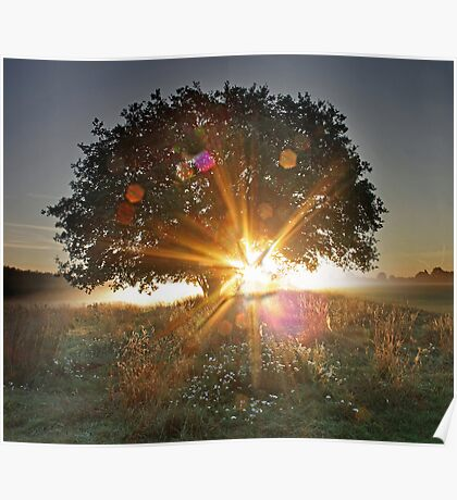 Dawn Decoration Poster