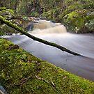 Bourke Creek Rapids by Travis Easton