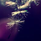 droplets of twilight sparkles by Ingz