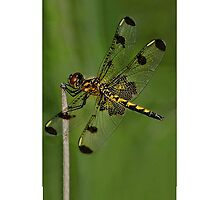 Ƹ̴Ӂ̴ƷTOTALLY HANDS ON- DRAGONFLY IPHONE CASE Ƹ̴Ӂ̴Ʒ by ╰⊰✿ℒᵒᶹᵉ Bonita✿⊱╮ Lalonde✿⊱╮