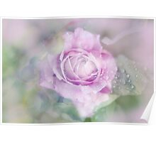 Fresh Morning Rose. Floral Abstract Poster