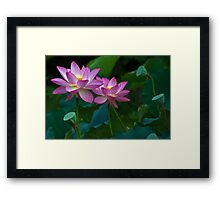 Life And Beauty Framed Print
