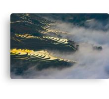Terraced rice field Canvas Print