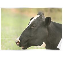 Head of a Cow Poster