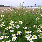 Daisies on the Beach by lezvee